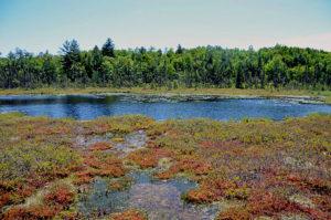 Guided Bog Walk @ Hidden Valley Nature Center   Riverside   California   United States