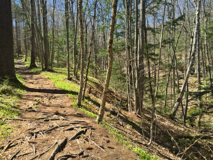 The Ravine Trail got its name for obvious reasons. Shannon Bryan photo