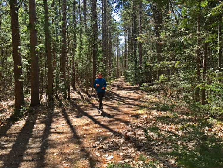 Tall trees and a pine needle-covered trail = perfection. Shannon Bryan photo