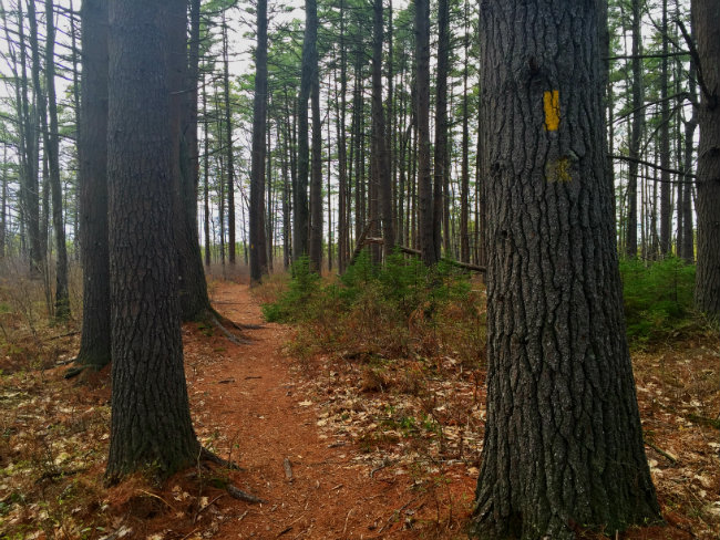 The loop trail through the woods. Shannon Bryan photo