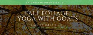 Fall Foliage Yoga with goats @ Sunflower Farm Creamery | Cumberland | Maine | United States