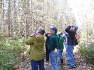 Spring Hike Series – Fred Yost, birds by sight and sound @ Old Pond Railway Trail | Hancock | Maine | United States