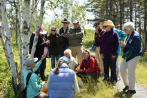 Spring Hike Series – Jill Weber, wildflowers and other plants @ Frances B. Wood Preserve | Gouldsboro | Maine | United States