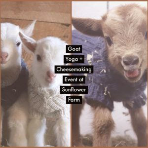 Goat Yoga & Cheesemaking Day Retreat at Sunflower Farm @ Sunflower Farm | Cumberland | Maine | United States
