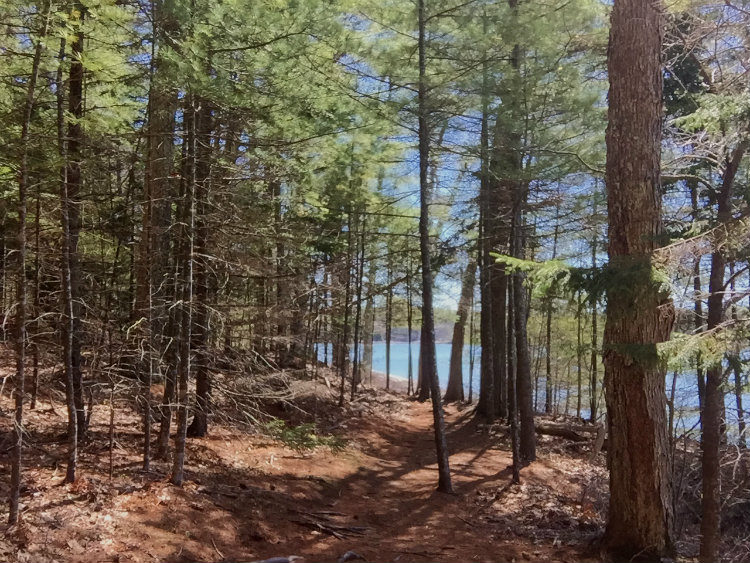 The Shore Trail at Dodge Point Preserve offers glimpses of the Damariscotta River through the trees, and open spots where you can walk onto the shoreline. Shannon Bryan photo