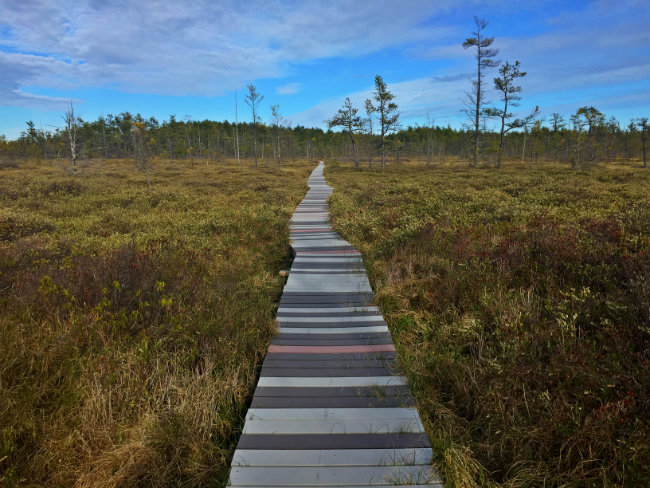 Saco Heath in the middle of the bog. Shannon Bryan photo