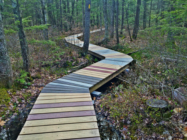 The boardwalk winds through the trees. Shannon Bryan photo