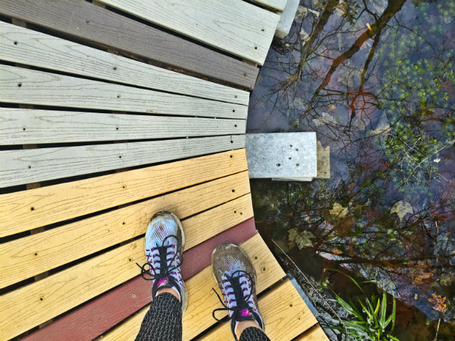 Looking down into the bog. (The mucky shoes are from a mud puddle elsewhere earlier in the day). Shannon Bryan photo
