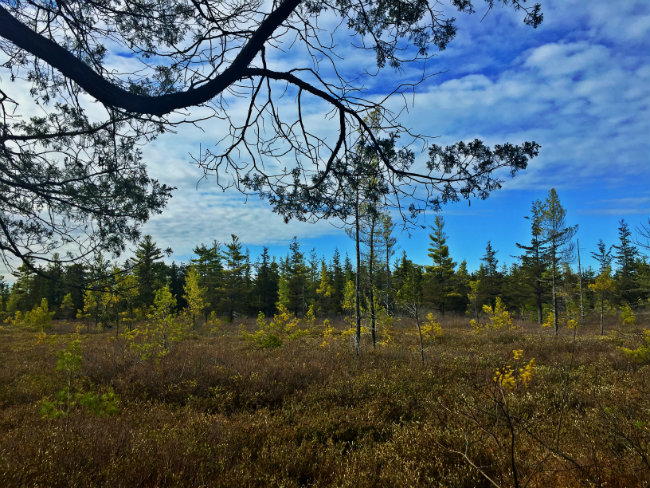 Looking out across the bog. Shannon Bryan photo