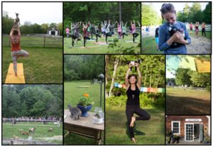 Yoga with Goats at Sunflower Farm @ Sunflower Farm Creamery | Cumberland | Maine | United States
