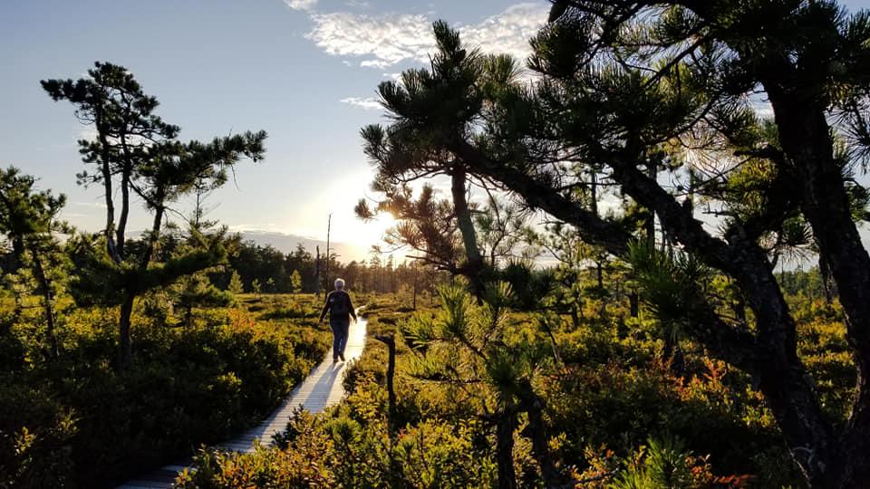 Walk the boardwalk, jog the bog at stunning Saco Heath in Saco