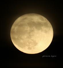 Full Moon Walk on the Eastern Trail @ Eastern Trail  | Saco | Maine | United States