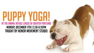 Puppy Yoga at the ARLGP @ Animal Refuge League of Greater Portland | Westbrook | Maine | United States