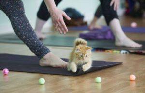 Kitten Yoga @ Jai Yoga