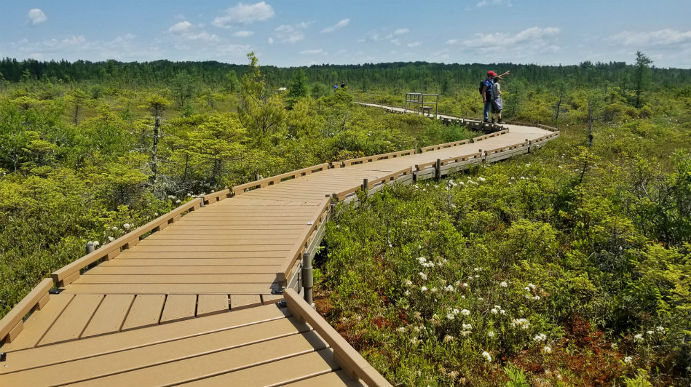 two people walking boardwalk path through bog