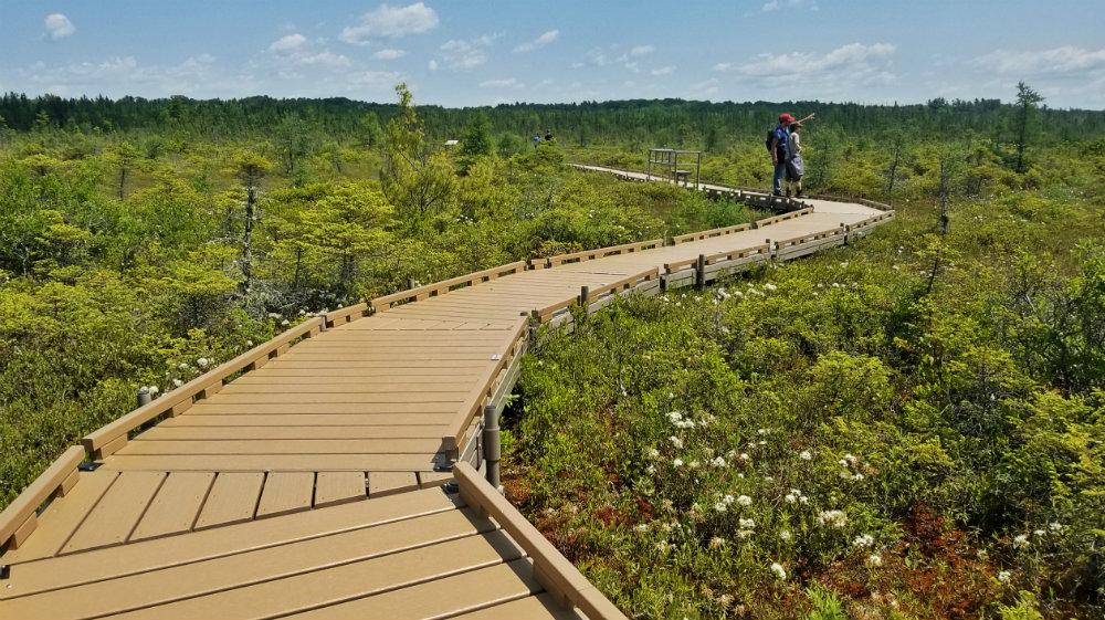 two people walking boardwalk path through bog